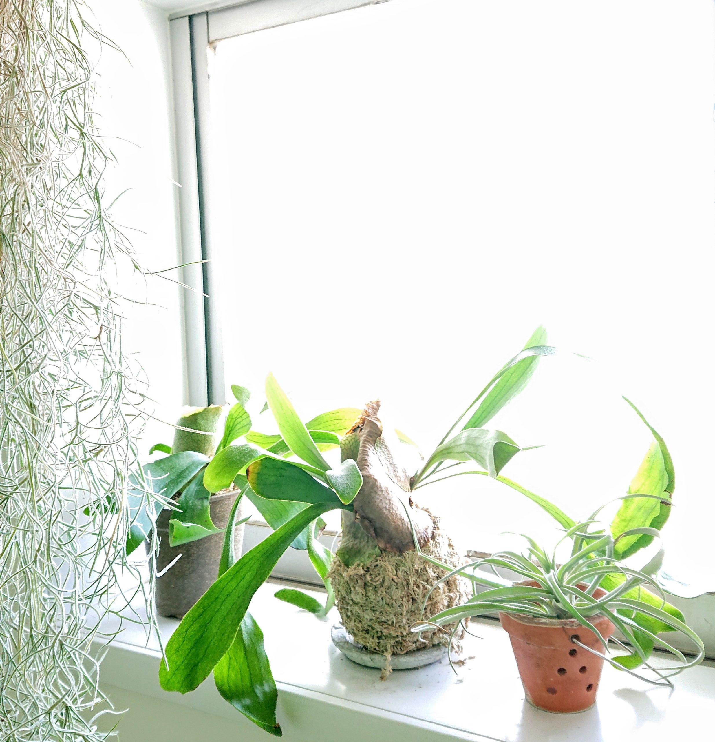 image_着生植物
