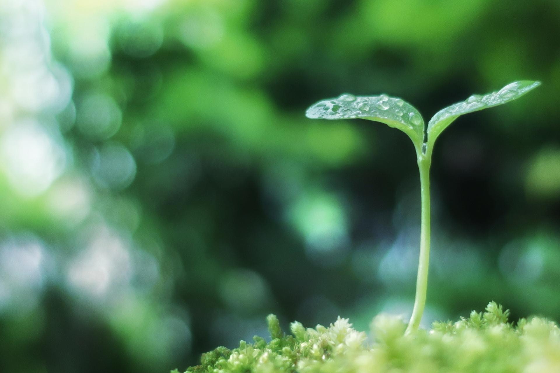 植物の成長