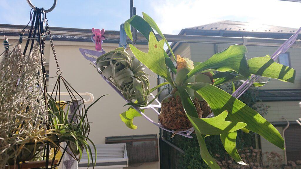 植物の日向ぼっこ